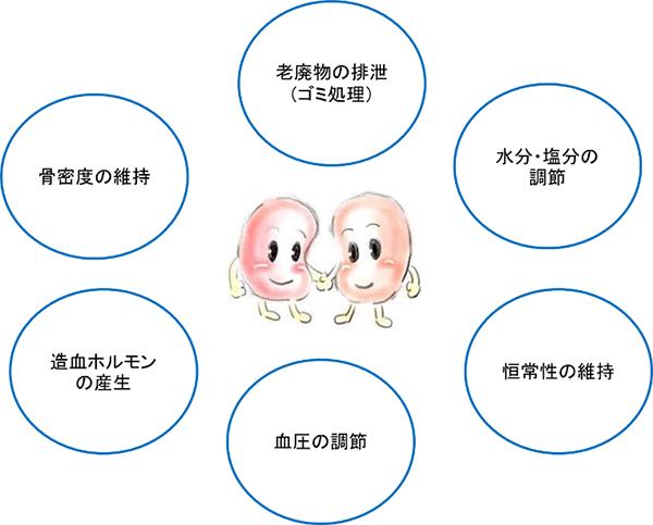 腎臓の働き